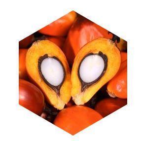 L'huile de palmiste - Matières premières