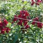 SUPPORT NET FOR CUTTING FLOWERS - Farm and garden