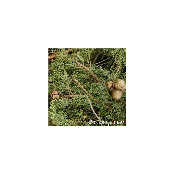 Eau florale de Cyprès biologique - Eaux florales