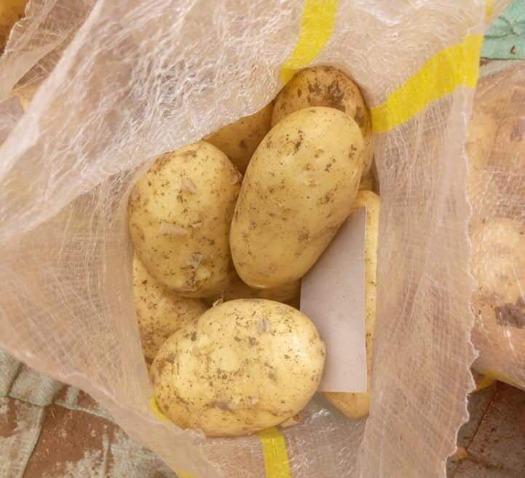 """Patatas orgánicas - """"spunta"""""""