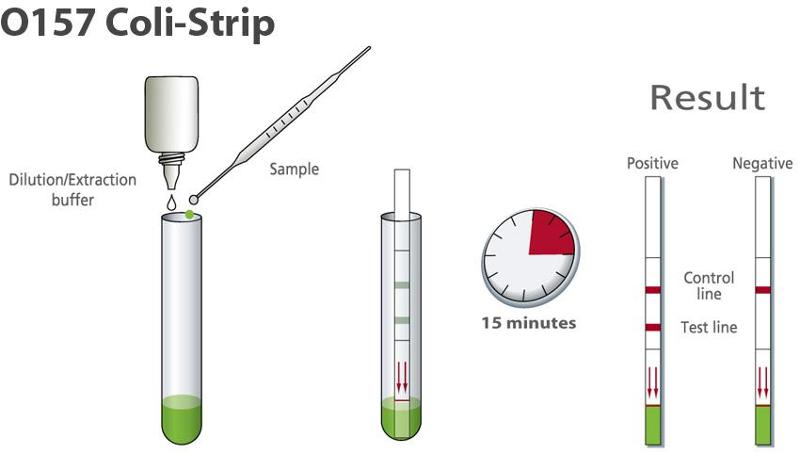 E. coli : Rapid diagnostic for detection - Dipstick (Strip) - null