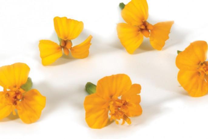 fleurs comestibles à déguster