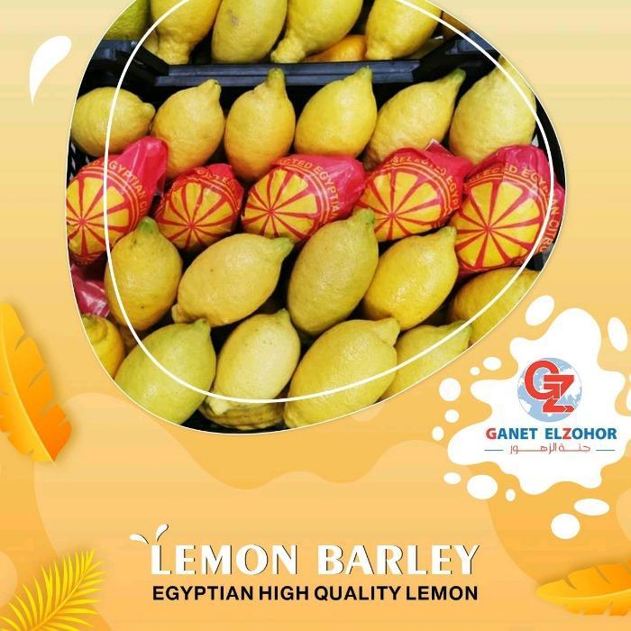 Limone - Limone Adhalia