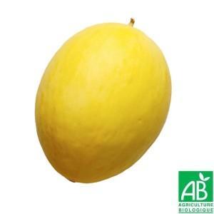 Melon hybride