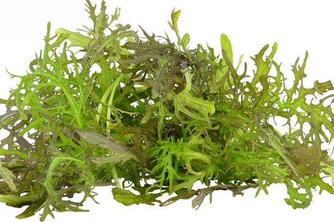 Metisse - Légumes - jeunes pousses