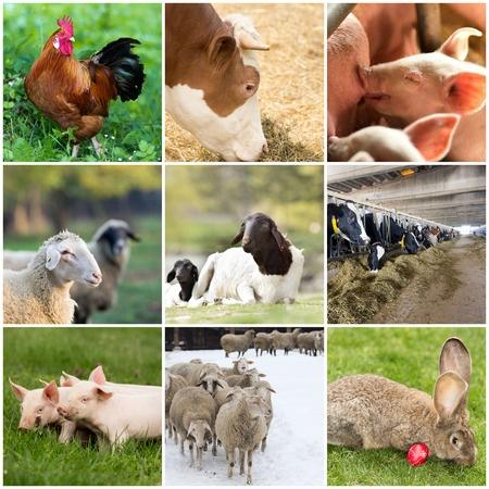 Alimentation animale -