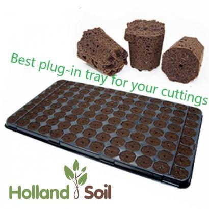 Plug-in tray for your cuttings -