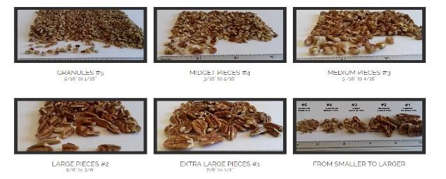Shelled Pecan - Shelled Pecan Sizes