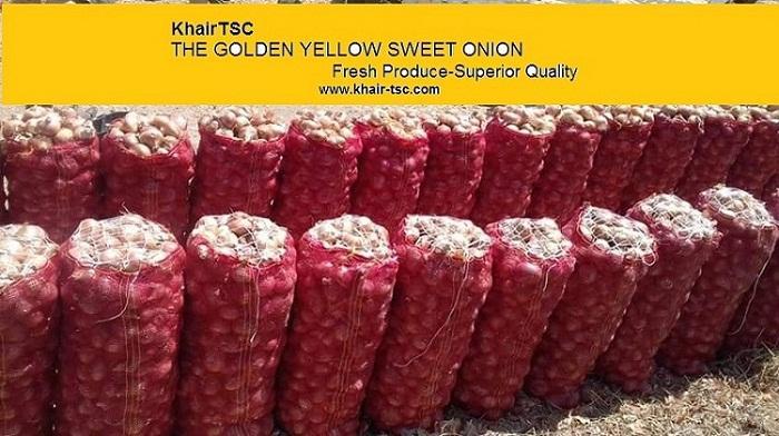 onion - yellow onion