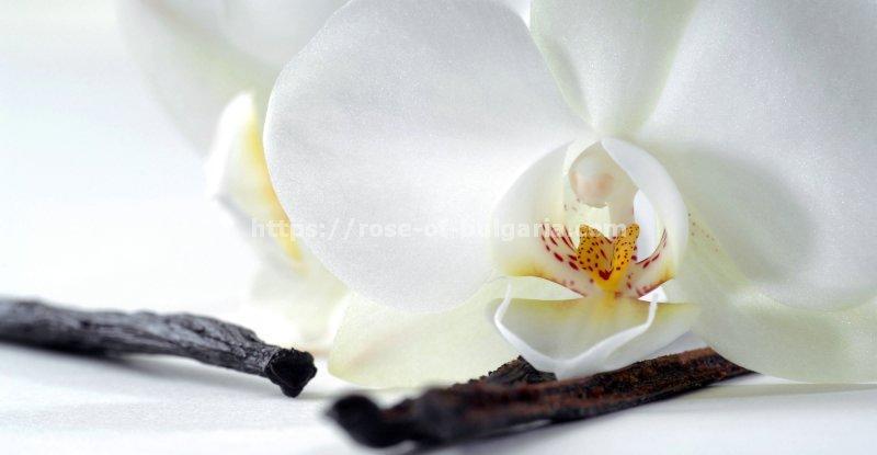 essences for perfume - Essences oil wholesale france