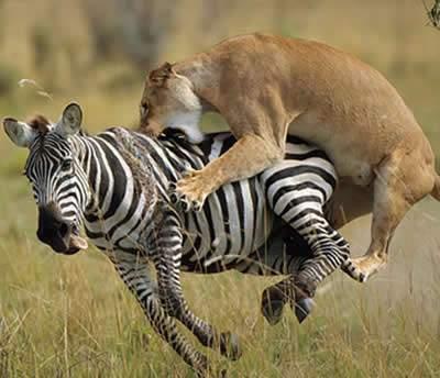 6 Days Kenya Safaris & Tour Packages