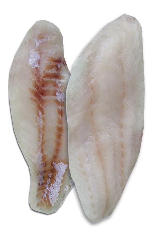 Filetto di Cernia Indopacifica Congelato IQF - Ittico - Filetti