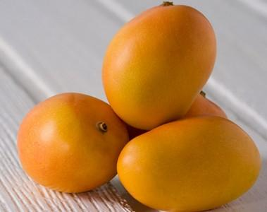 MINI MANGUE RUNGIS -