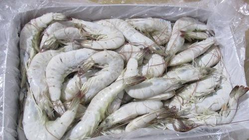 Shrimp - HLSO (Head Less Shell ON)  -