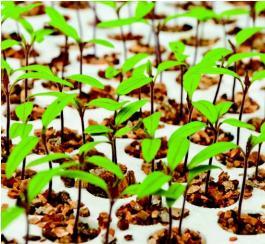 Remix 4 - Fertilizers