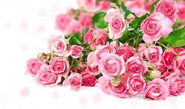 Минеральное органическое удобрение ГУМАТ КАЛИЯ AGRO для роз -