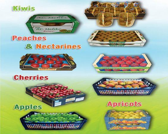 FRUITS - Peaches  Nectarines  Cherries  Plums  Apricots  Apples  Kiwis