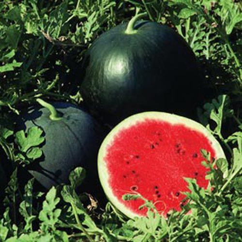 Watermelons - From Ilia Pyrgos Greece