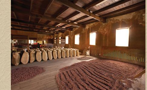 fèves de cacao. - gamme de qualité des fèves de cacao.
