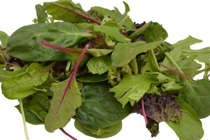 Mesclun - Légumes - jeunes pousses