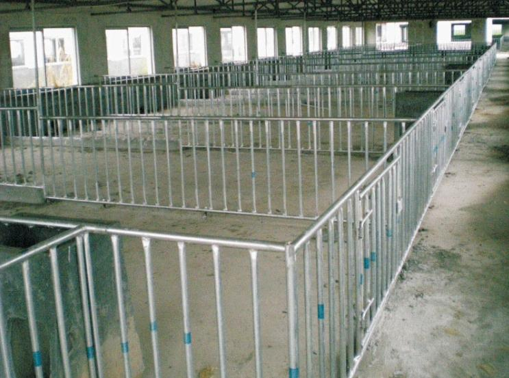 Boar crate/ stall/pen - Animal Cages