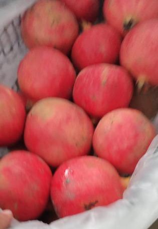Egyptian pomegranate  - GANETELZOHOR