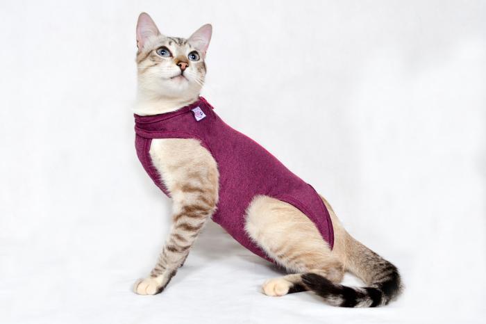 Roupa pós cirúrgica para gatos - exclusiva para gatos
