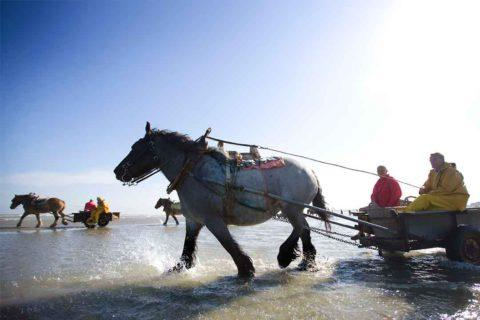 Belgian Coast Day Trip - Services