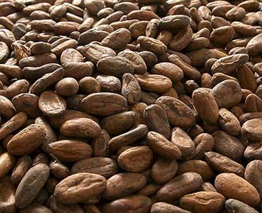 Alcoolat de Cacao -