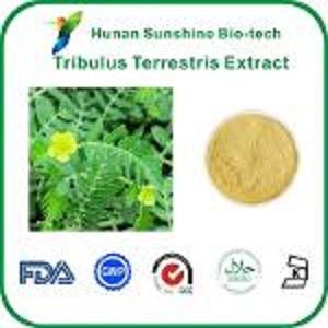 Tribulus Terrestris Extrait - Apparence: brun jaune poudre    Garantit le temps de la nature: Deux ans