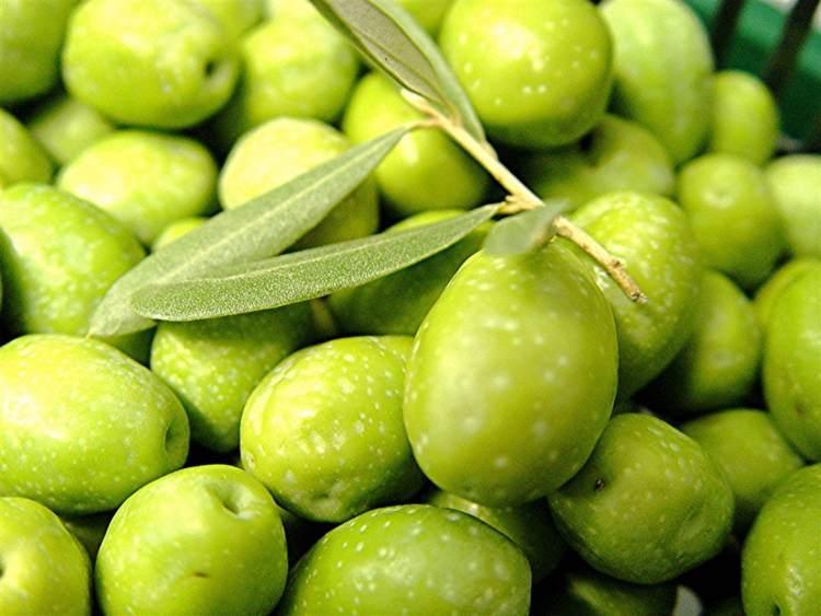 olives vertes - olives vertes