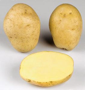Potatoes - Yellow skin - MARABEL