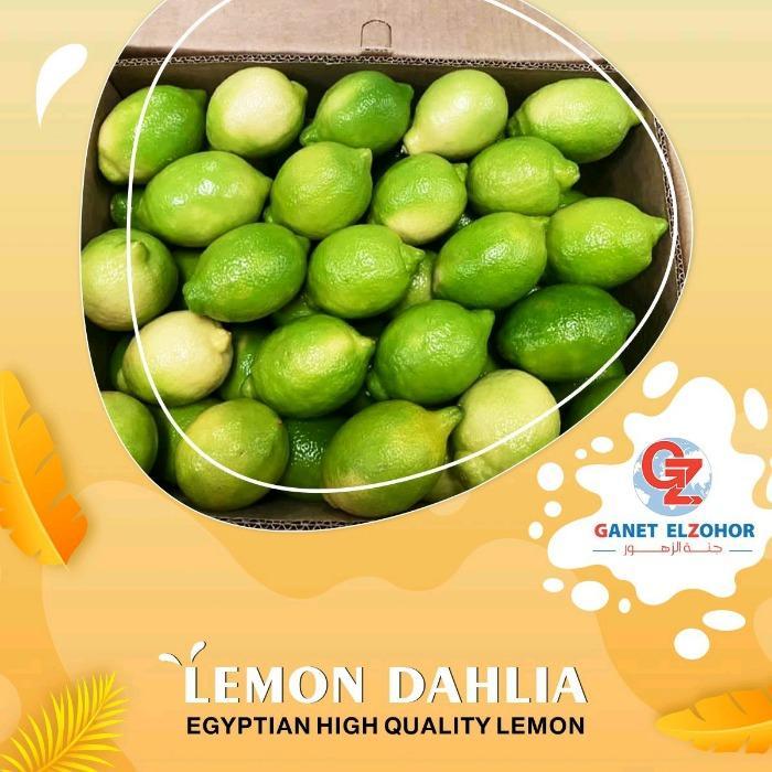 """Limone Dhalia - """" Giallo verde """""""