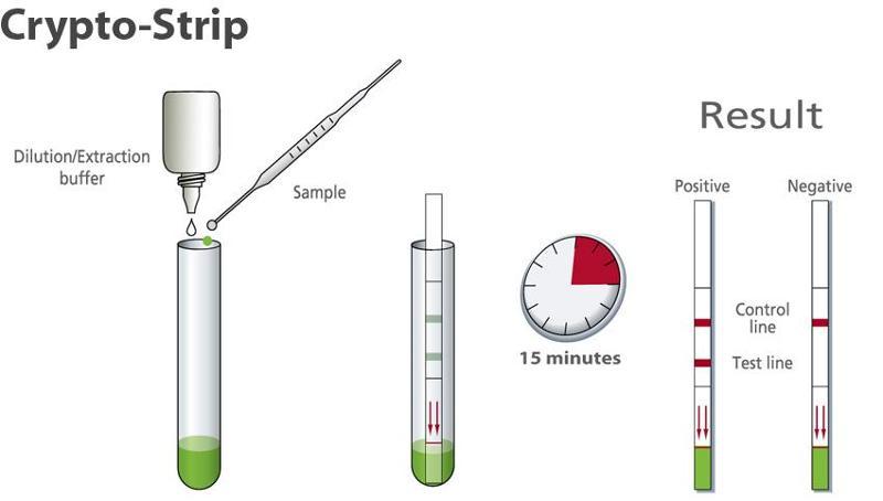 Rapid diagnostic for detection of Cryptosporidium - null