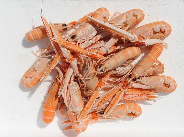 Crustacés - Gamme de crustacés de la Maison Thaëron