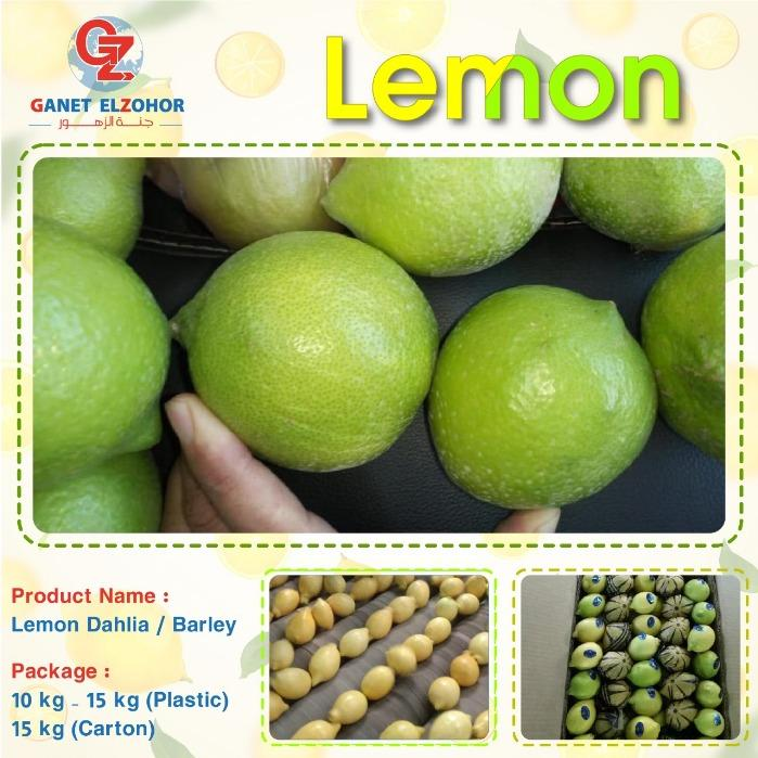 Egyptian Lemon - ( Dhalia & Barley )