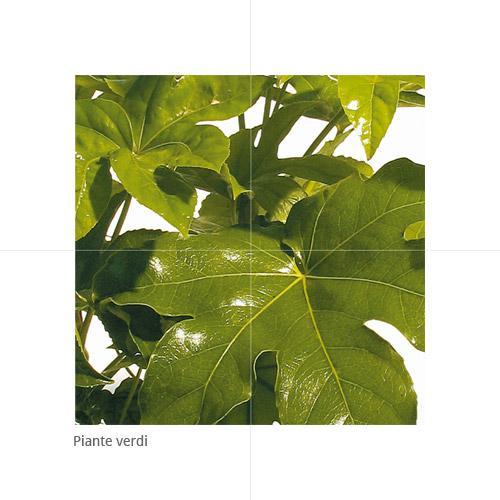 Piante Verdi - null