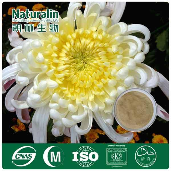 Chrysanthemum Extract