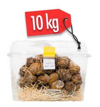 LUMACHE HELIX ASPERSA MULLER 10kg