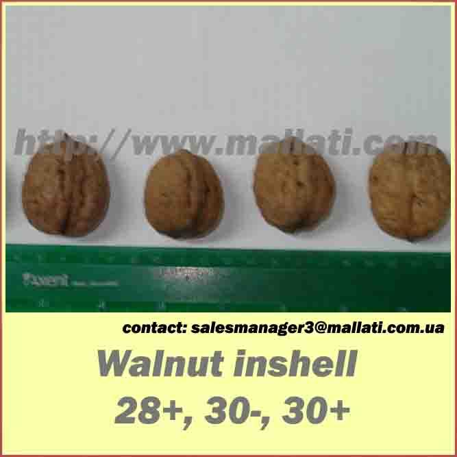 Walnut  in snshell 28+.30-. 30+
