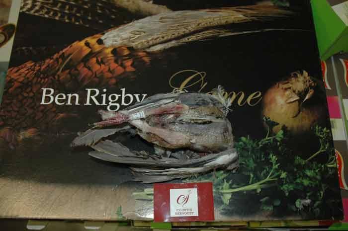 Pigeon Ramier -