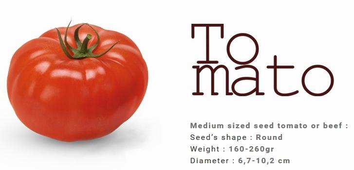 TOMATO variety Elpida and Belladonna