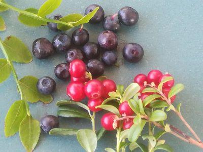 Berry season is here!