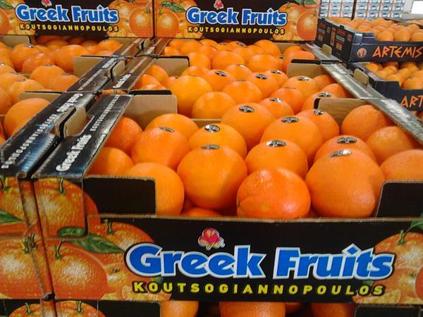 Oranges PRE-ORDER now