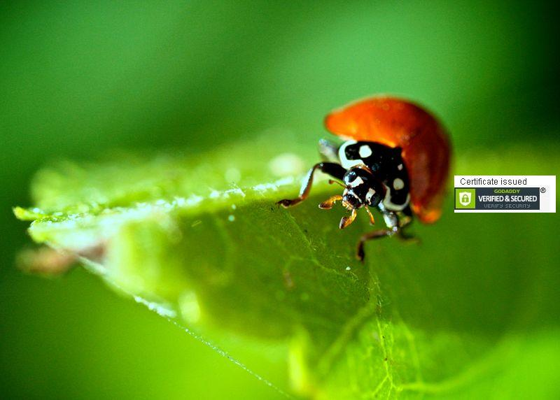 Hosting a public seminar on Ladybugs!