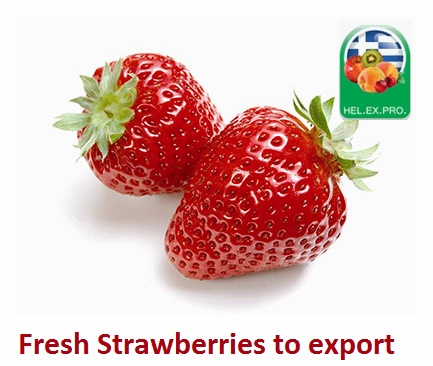 FRESH Strawberries for Export