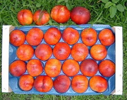 Гладкие персики