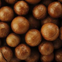 2019 Season Macadamia Nuts for Export