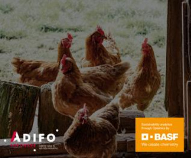 Sustainable feed production: How to go about it