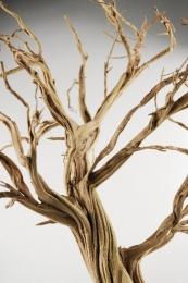 Bois mort du desert en 200cm for Bois flotte beziers